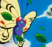 Butterfree, estrategia COMPETITIVA