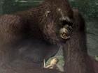 Peter Jackson's King Kong Avance