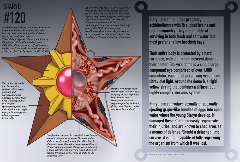 Lujo Anatomía De Pikachu Inspiración - Anatomía de Las Imágenesdel ...
