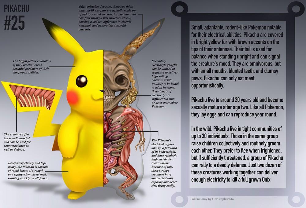 El libro de anatomía que muestra el interior de los Pokémon - 3DJuegos